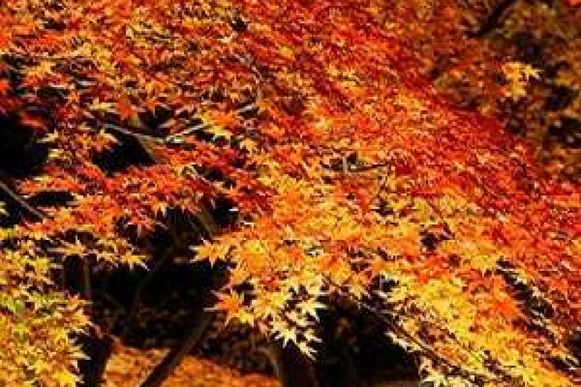 【紅葉ライトアップ観賞プラン】赤、黄、橙に染まる幻想的な木々に心がドキドキ◆11月1~17日限定