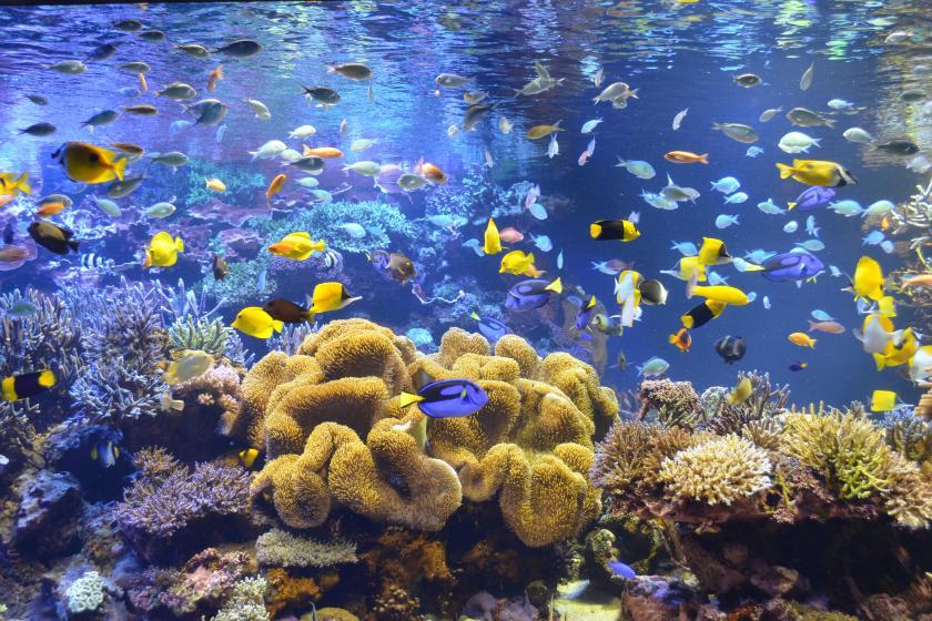 【鳥羽水族館チケット付】飼育種類数日本一!海の生き物の魅力にたっぷり一日中楽しめるプラン