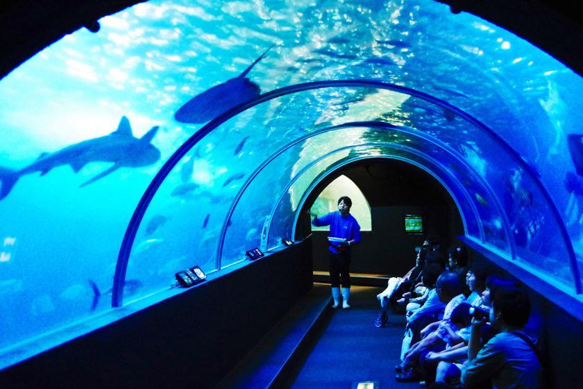 【家族旅行におすすめ】海中公園水族館+海中展望塔チケット付きプラン