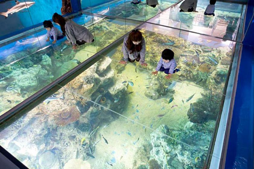 【チケット付き】イルカショーやペンギンのおさんぽタイムが楽しい松島水族館チケット付きプラン