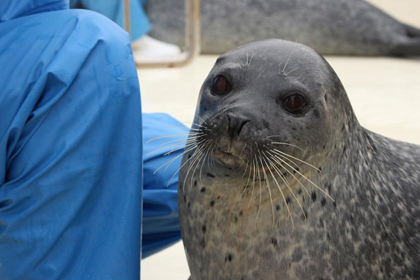 【チケット付き】イルカショーやペンギンのおさんぽタイムが楽しい松島水族館チケット付きプラン<3/19~6/30 心ゆくまで味わえる『かに食べ放題』>