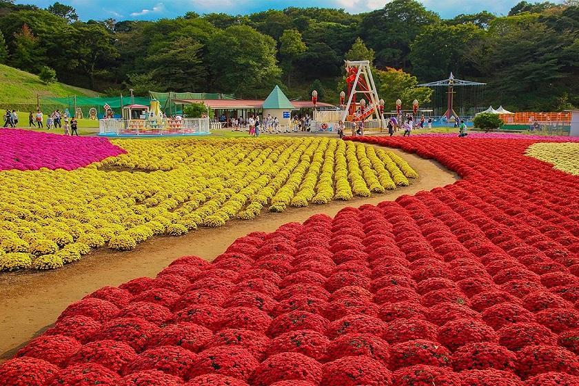 【チケット付き】小さなお子様連れのファミリーにぴったり!広い芝生が待っている!東京ドイツ村チケット付きプラン