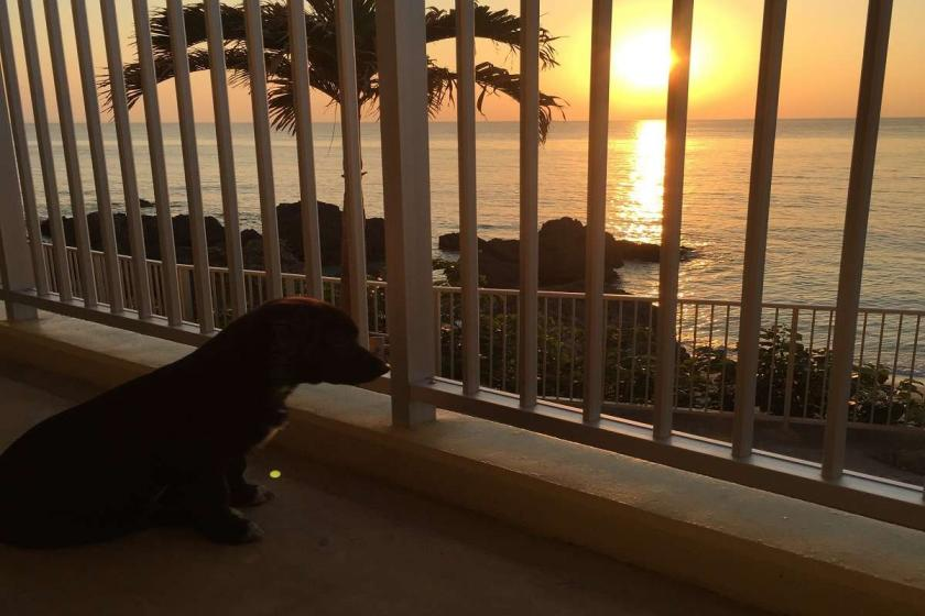 【Go To トラベル対象プラン】ペットと一緒に専用ルームで『沖縄旅行を満喫』★【1匹専用】宿泊プラン【2連泊以上】