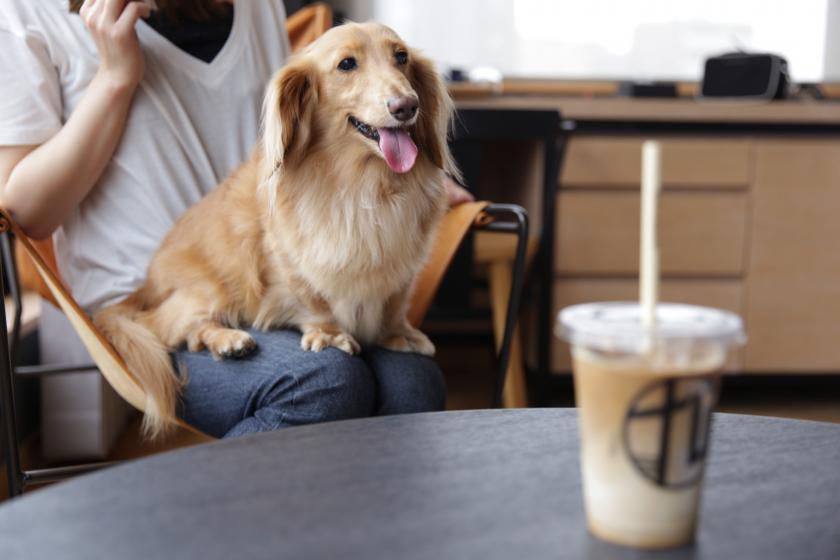 【ドッグフレンドリー】〜愛犬と一緒に浅草観光〜 <朝食付き>