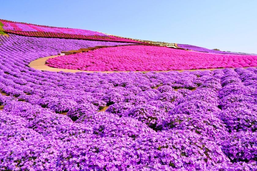 【東京ドイツ村入場券付き】自然とふれあうテーマパーク♪】40種の朝食バイキング★ファミリー