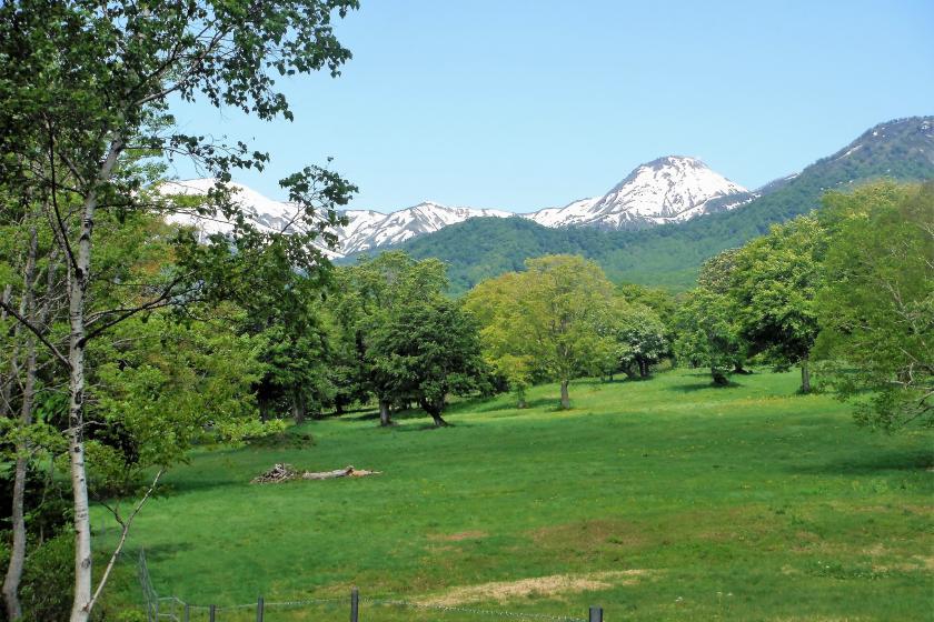 山野草とドイツトウヒとせせらぎの森笹ヶ峰ネイチャートレッキング<2食付>