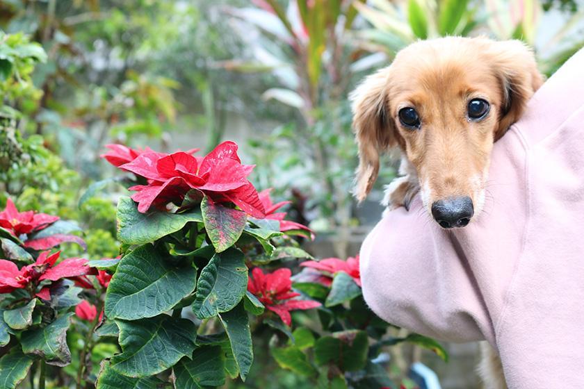 【◆ワンちゃんとココ旅◆】ワンちゃんと一緒 安心ステイ<小型犬2匹まで・2泊~>