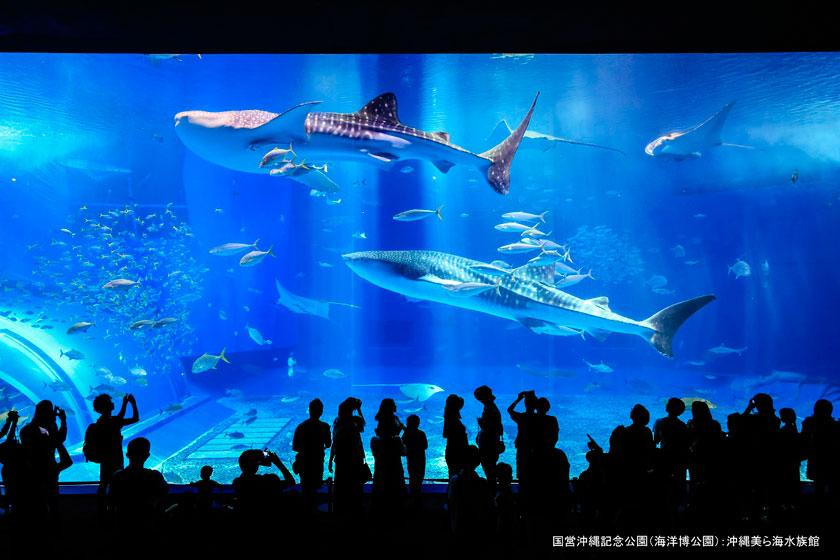 【美ら海水族館チケット付き】美ら島沖縄の神秘の海を満喫!ジンベエザメにも会える!