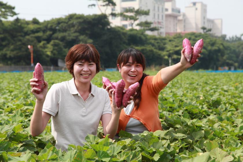 【開業30周年特別企画・ポイント3倍】アオアヲ秋の収穫祭!鳴門金時芋掘り体験で秋を満喫2021