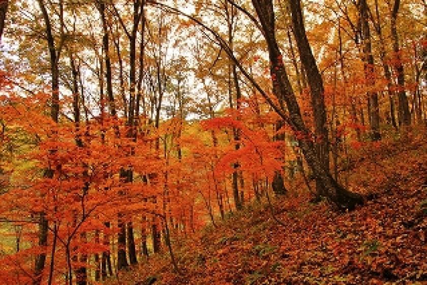 【馬と心を通わせる秋の1日体験付】黒姫山の麓の「アファンの森」で馬と触れ合う秋の滞在プラン(夕・朝食+アクティビティ時のご昼食付)